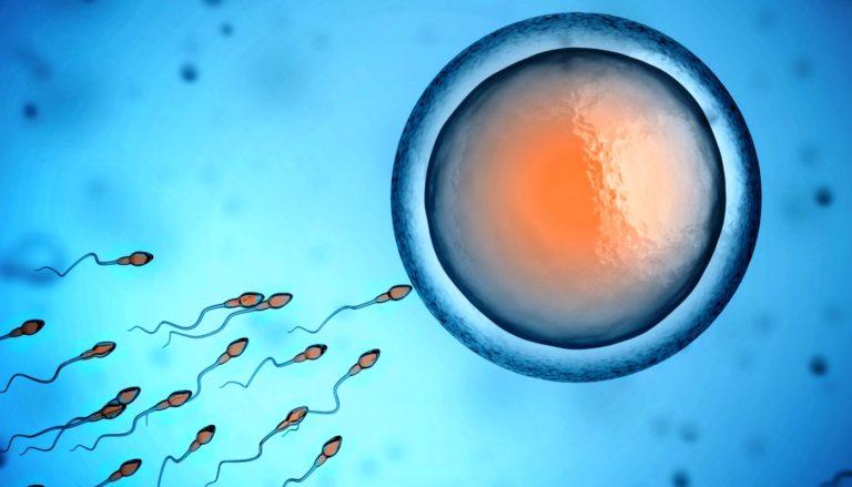Como interpretar o espermograma?